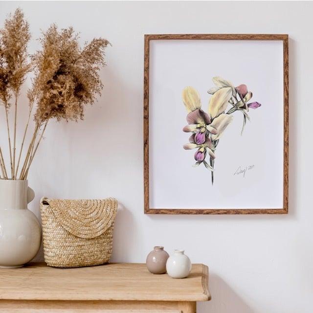 Image of Botanicals - Donkey Orchid
