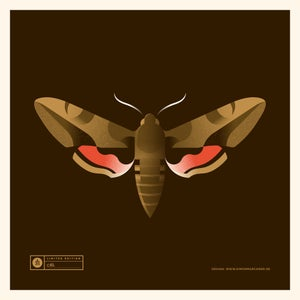Image of Hawkmoth Artprint
