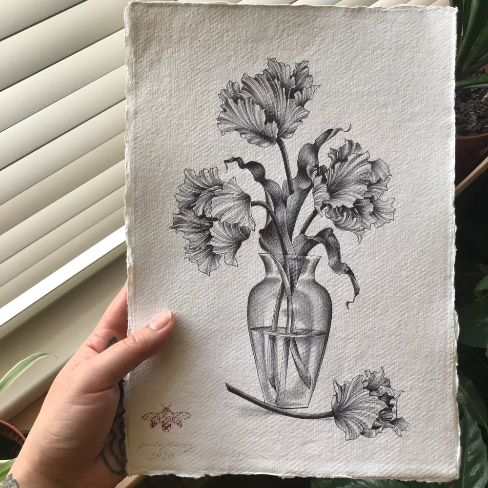 Image of Parrot tulips A4 original drawing