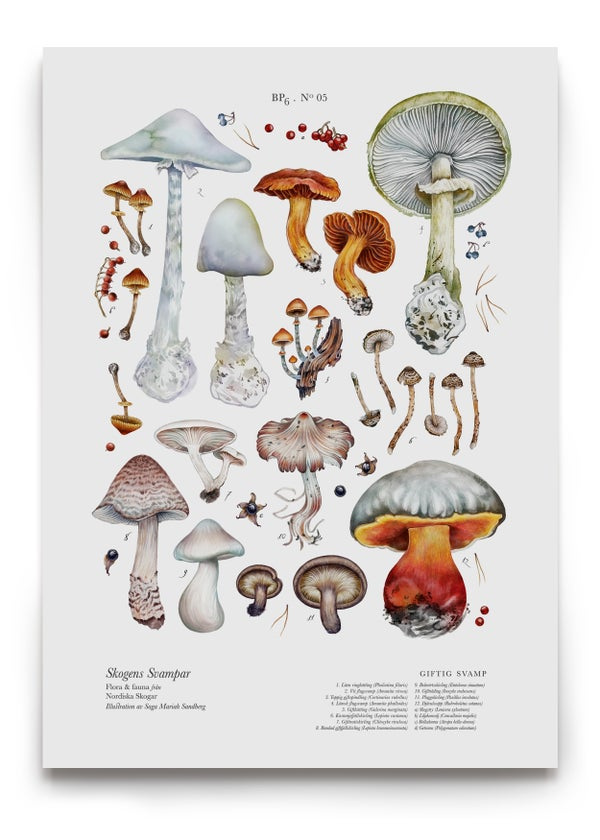 Image of POISONOUS SHROOMS / GIFTIG SVAMP