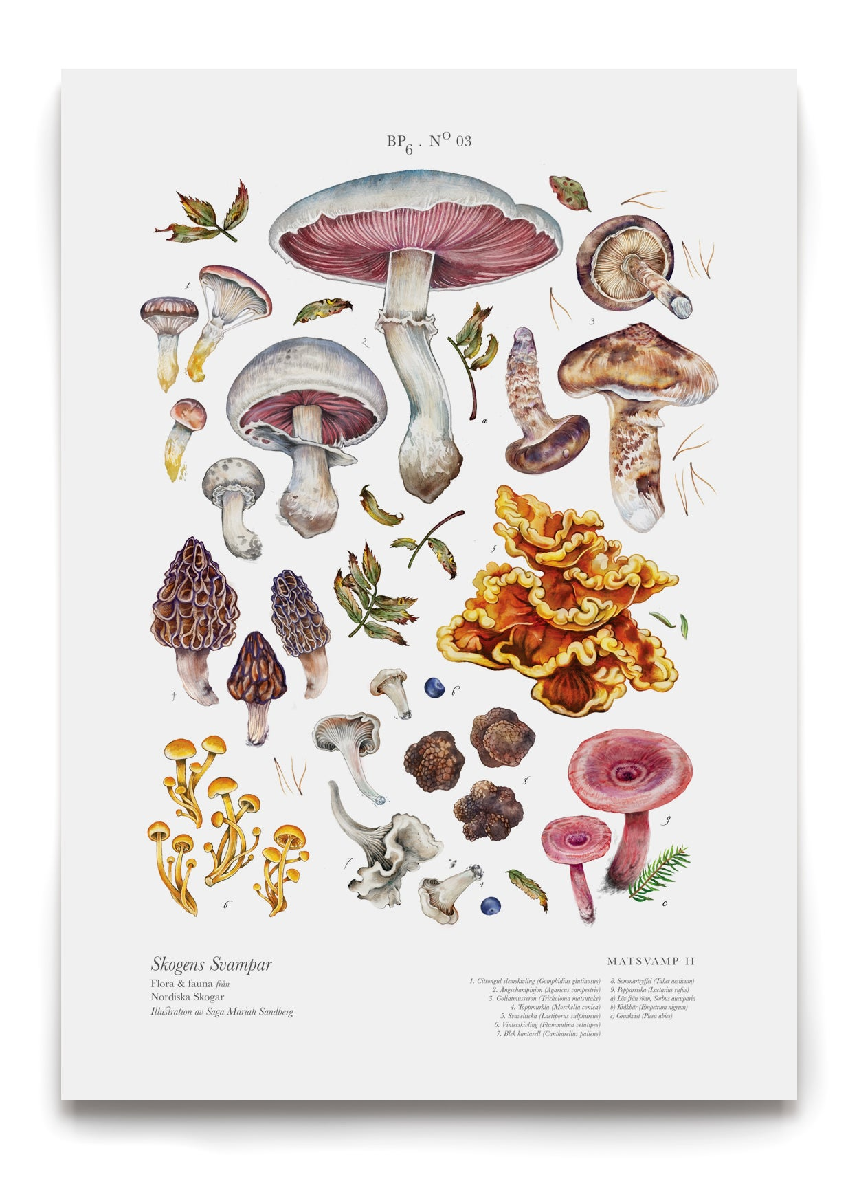 Image of EDIBLE SHROOMS II / MATSVAMP II