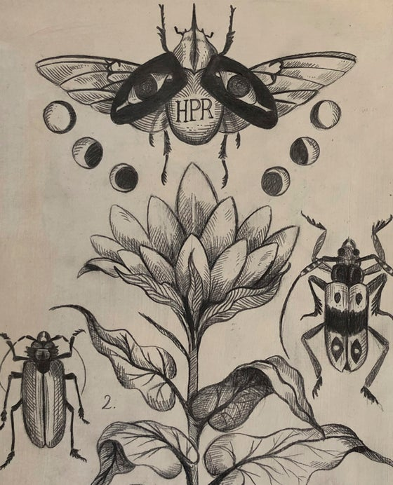 Image of Coleópteros