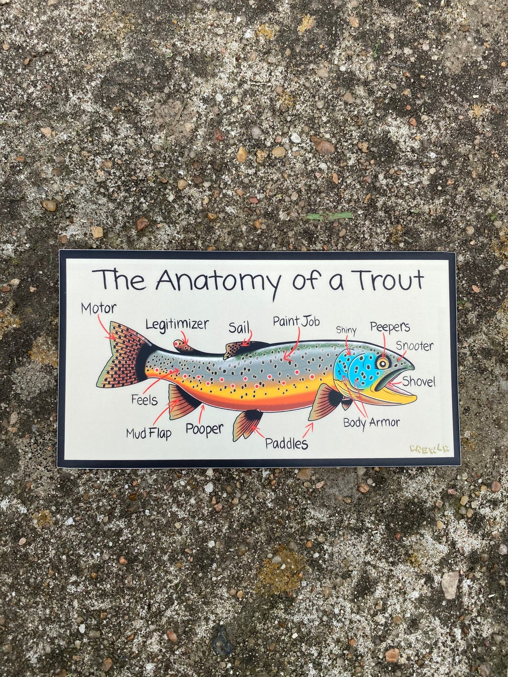 Image of Anatomy of a Trout Sticker