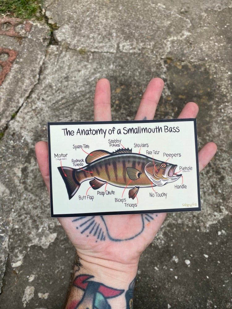 Image of Anatomy of a Smallmouth Bass Sticker