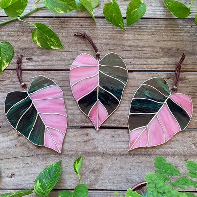 Image of Pink Princess Philodendron Leaf