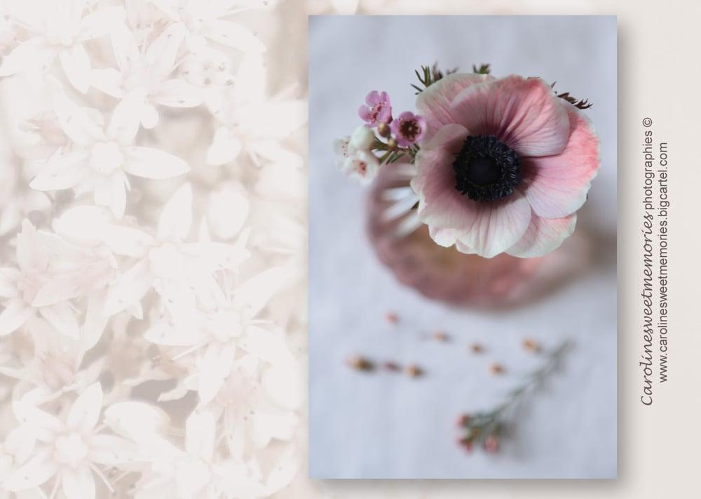 Image of L'anémone poudrée | carte postale