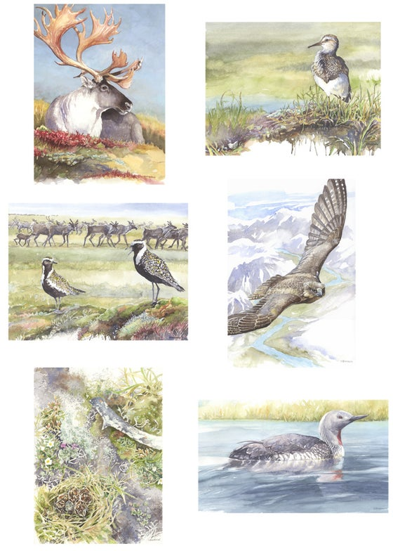 Image of Arctic Refuge card set