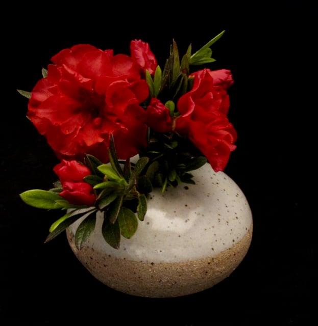 Pod bloom vase