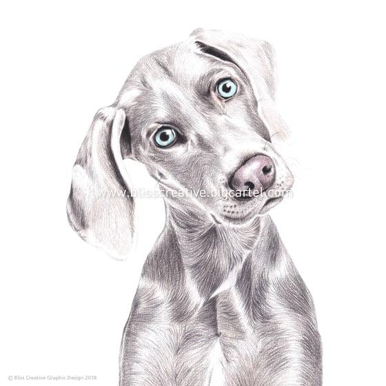 Image of Original Pet Illustrations