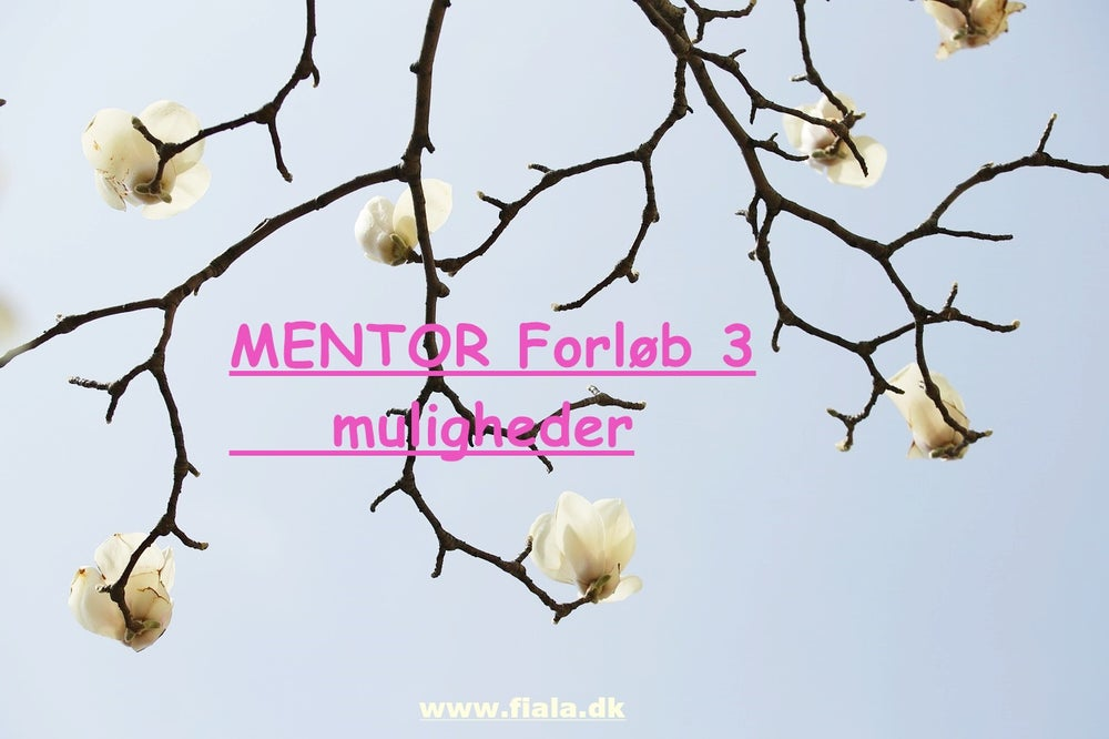 Mentor Online Forløb via 3 eller 5 eller 7 timer