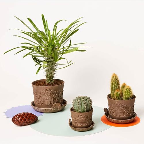 Image of manoa flower pot set M