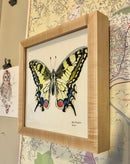 Image 2 of Framed Swallowtail Print