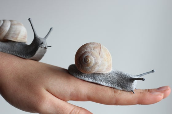Image of Giant Snail