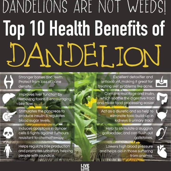 Image of Dandelion Leaf powder