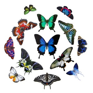 """Image of ✨New✨The Butterfly Collection 2 """"Jewels of the East"""""""