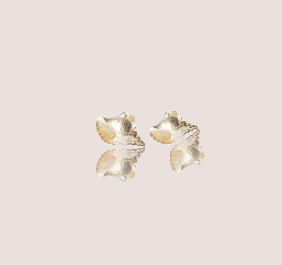 Image of Seashells Big