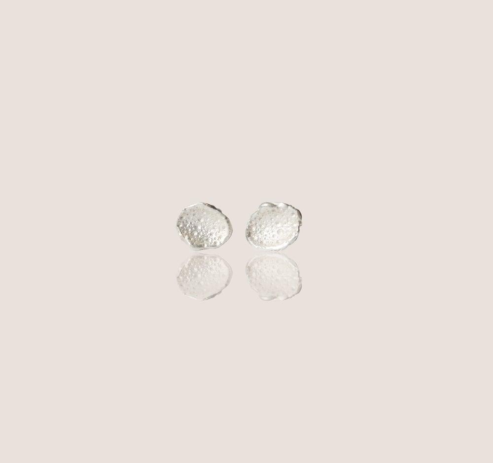 Image of Coral Shimmer