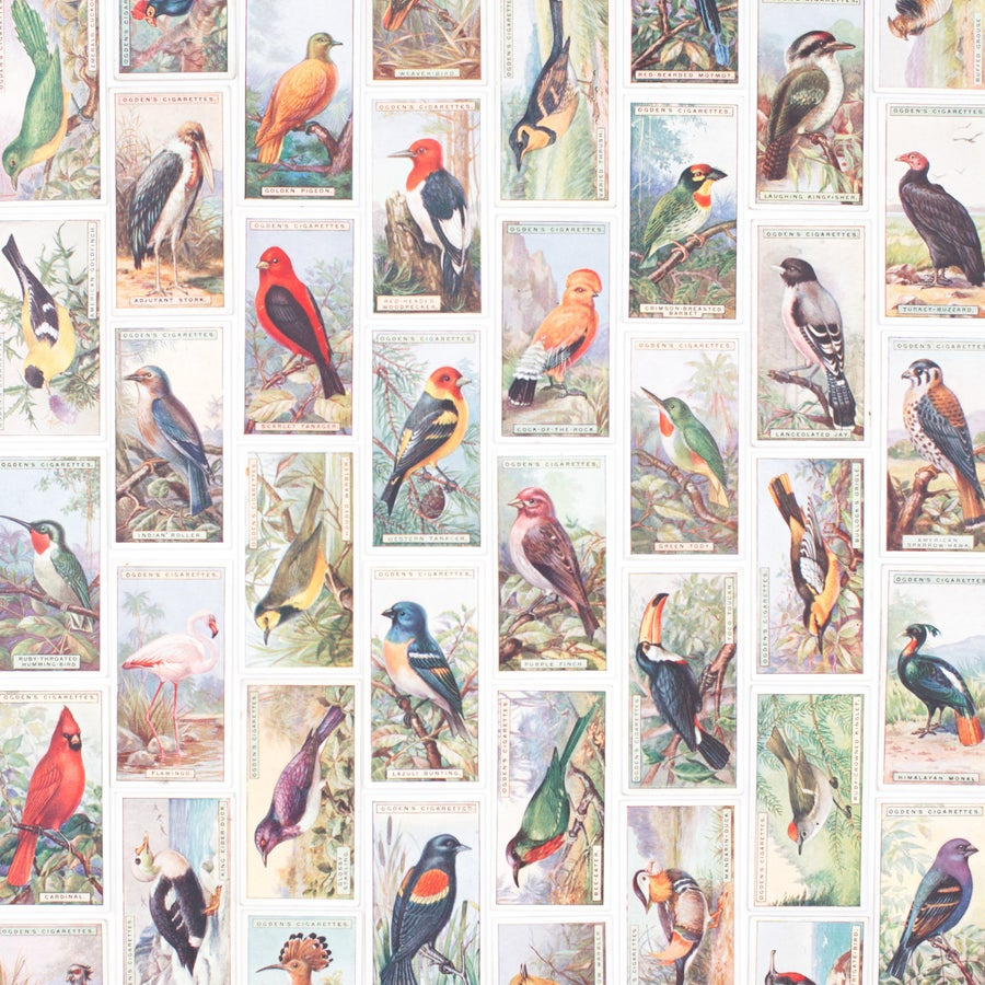Image of Foreign Birds Cigarette Cards - Set of 8