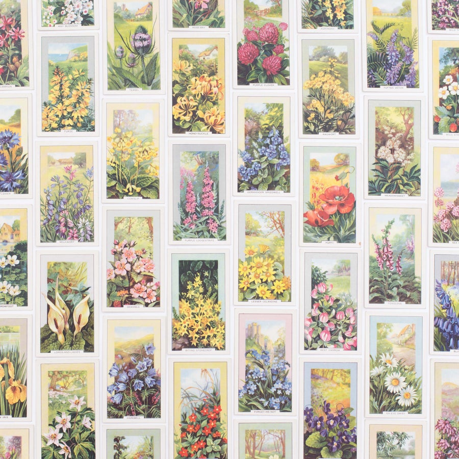 Image of Wild Flowers Cigarette Cards - Set of 8