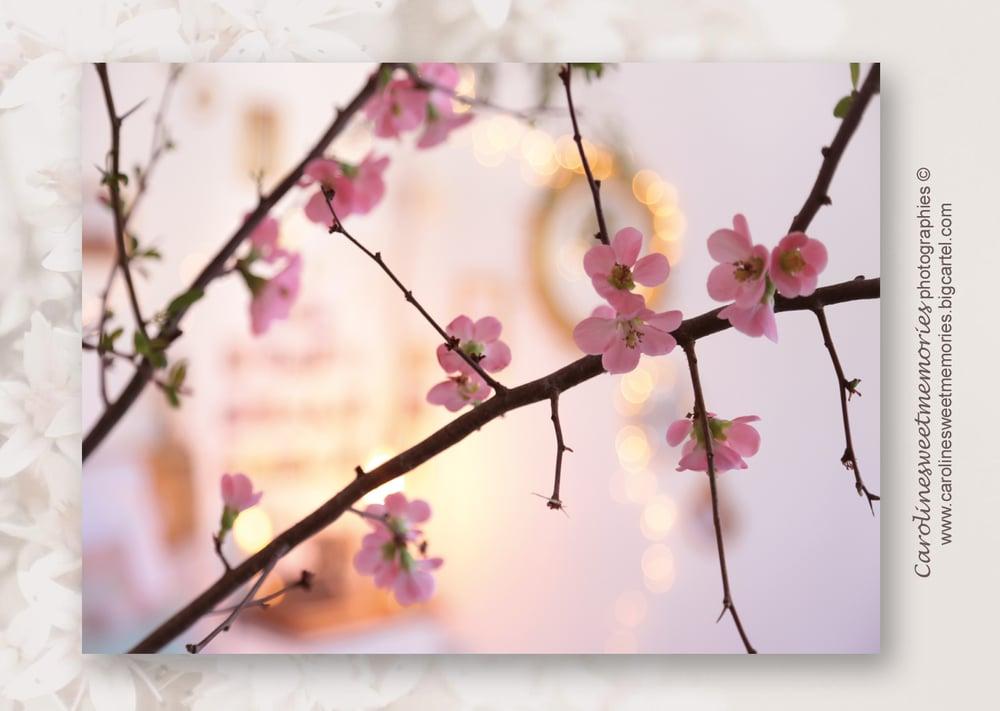 Image of Décor branche de cerisier | carte postale