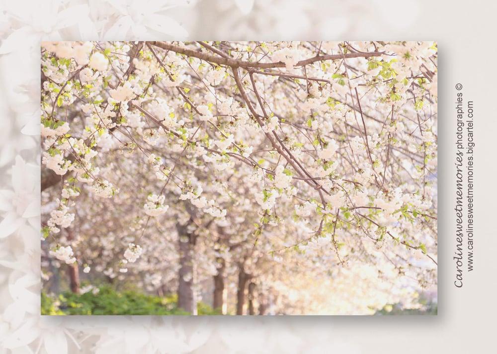 Image of Les cerisiers (2) | carte postale