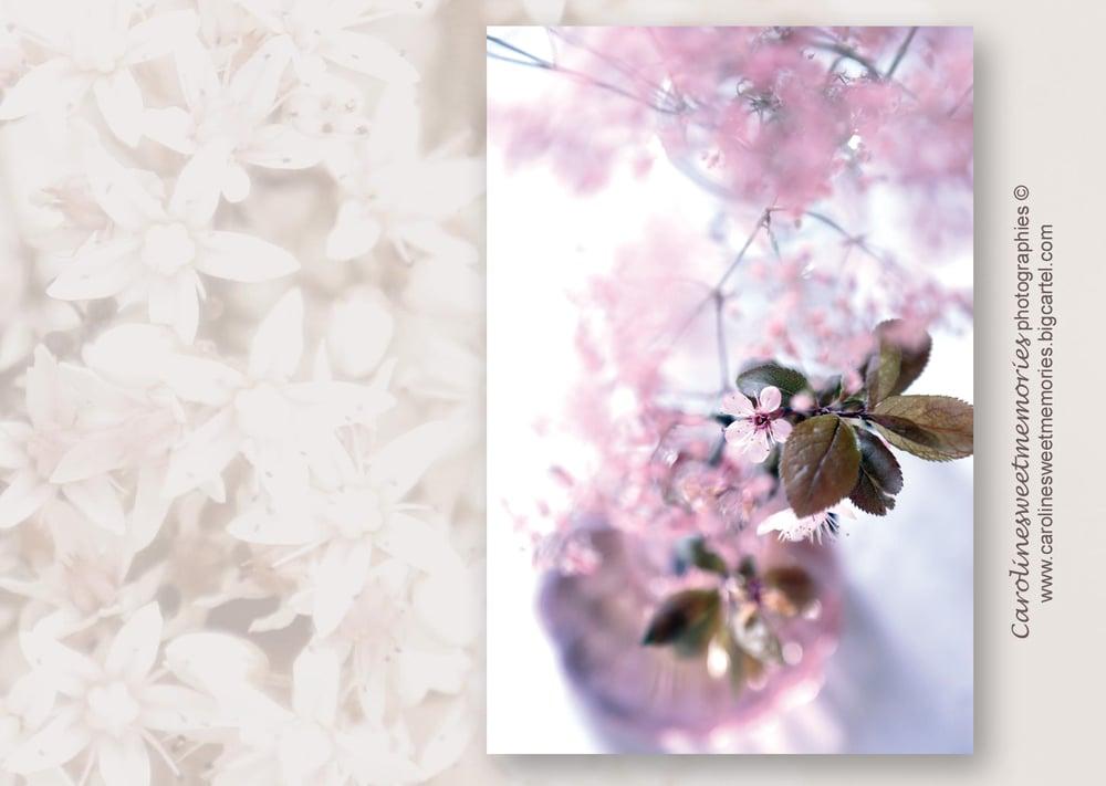 Image of Fleurettes roses | carte postale