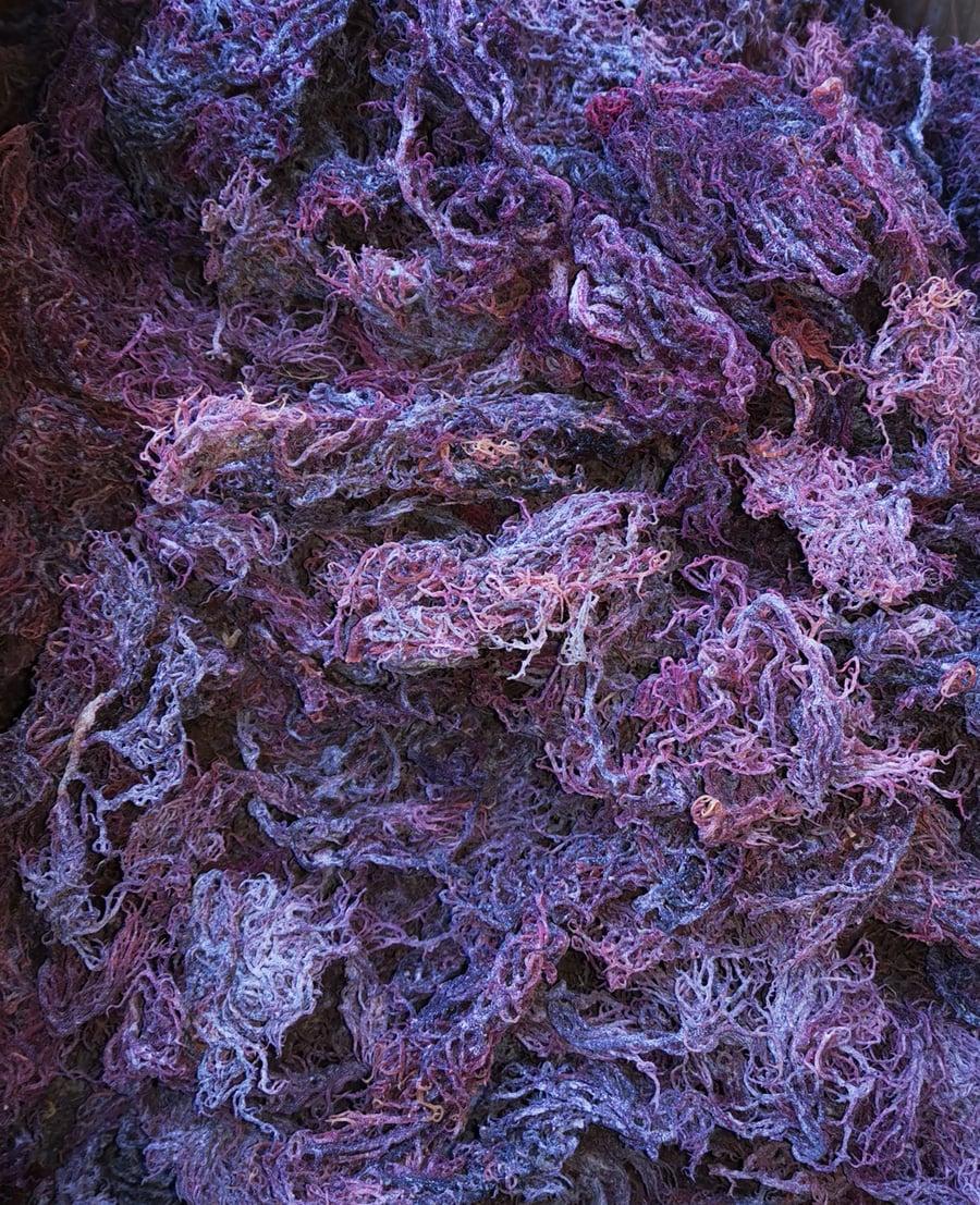 Image of Purple Seamoss