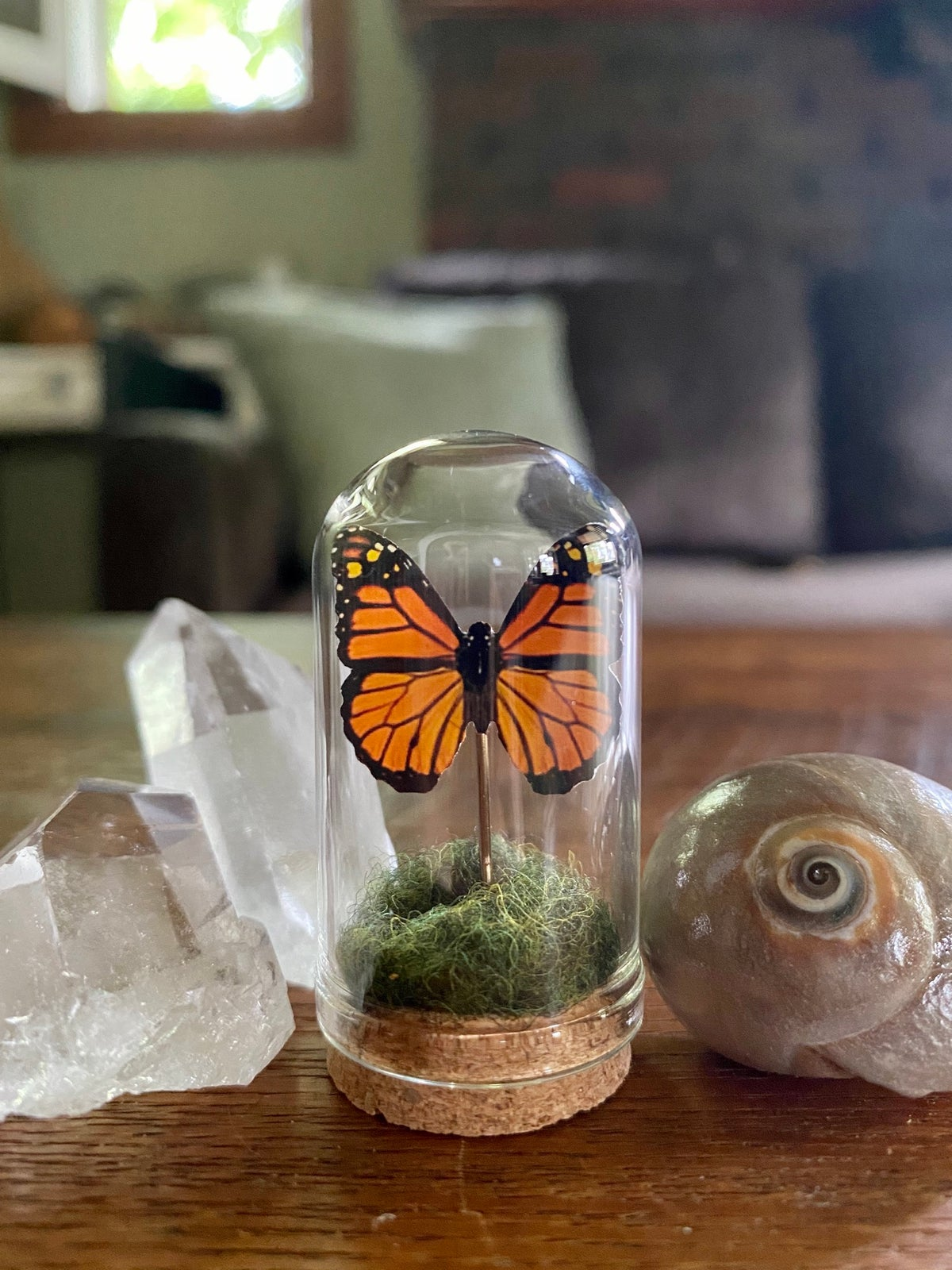 Image of Glass Butterfly or Moth Dome #1