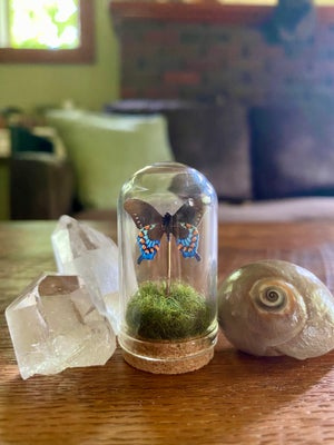 Image of Glass Butterfly or Moth Dome #2