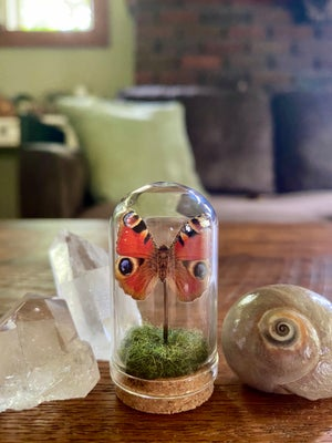 Image of Glass Butterfly or Moth Dome #3
