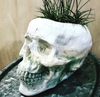 Skull planter (color variations available)