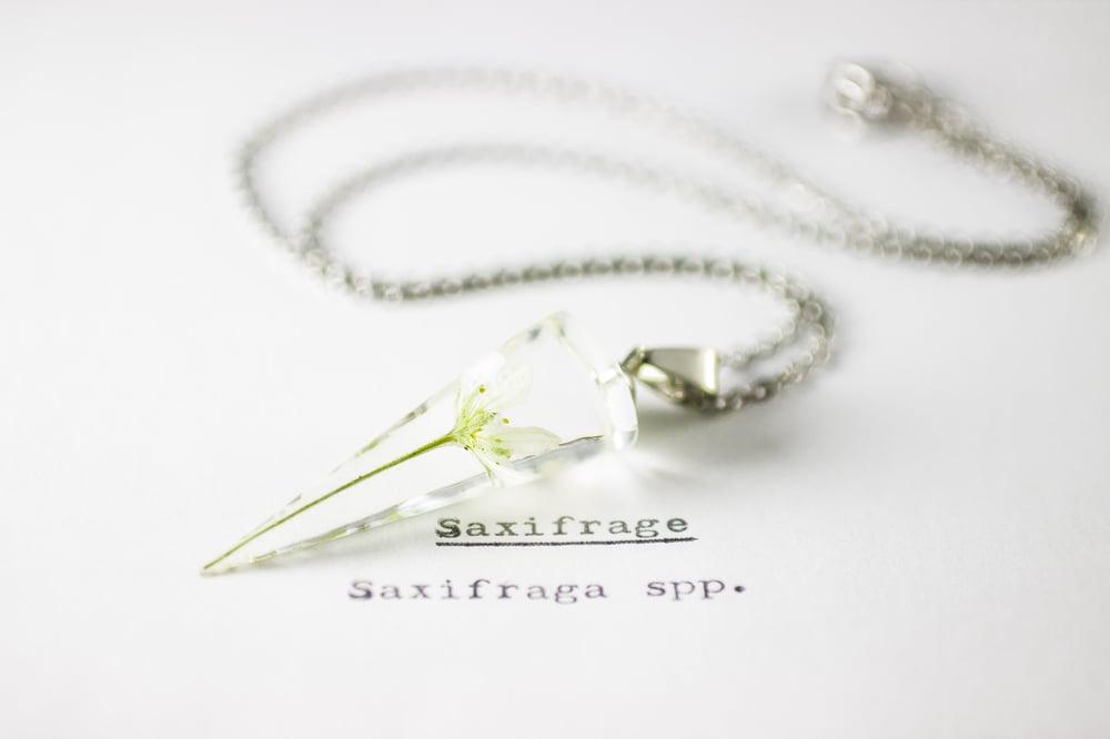 Image of Saxifrage (Saxifraga) - Conical Pendant #1