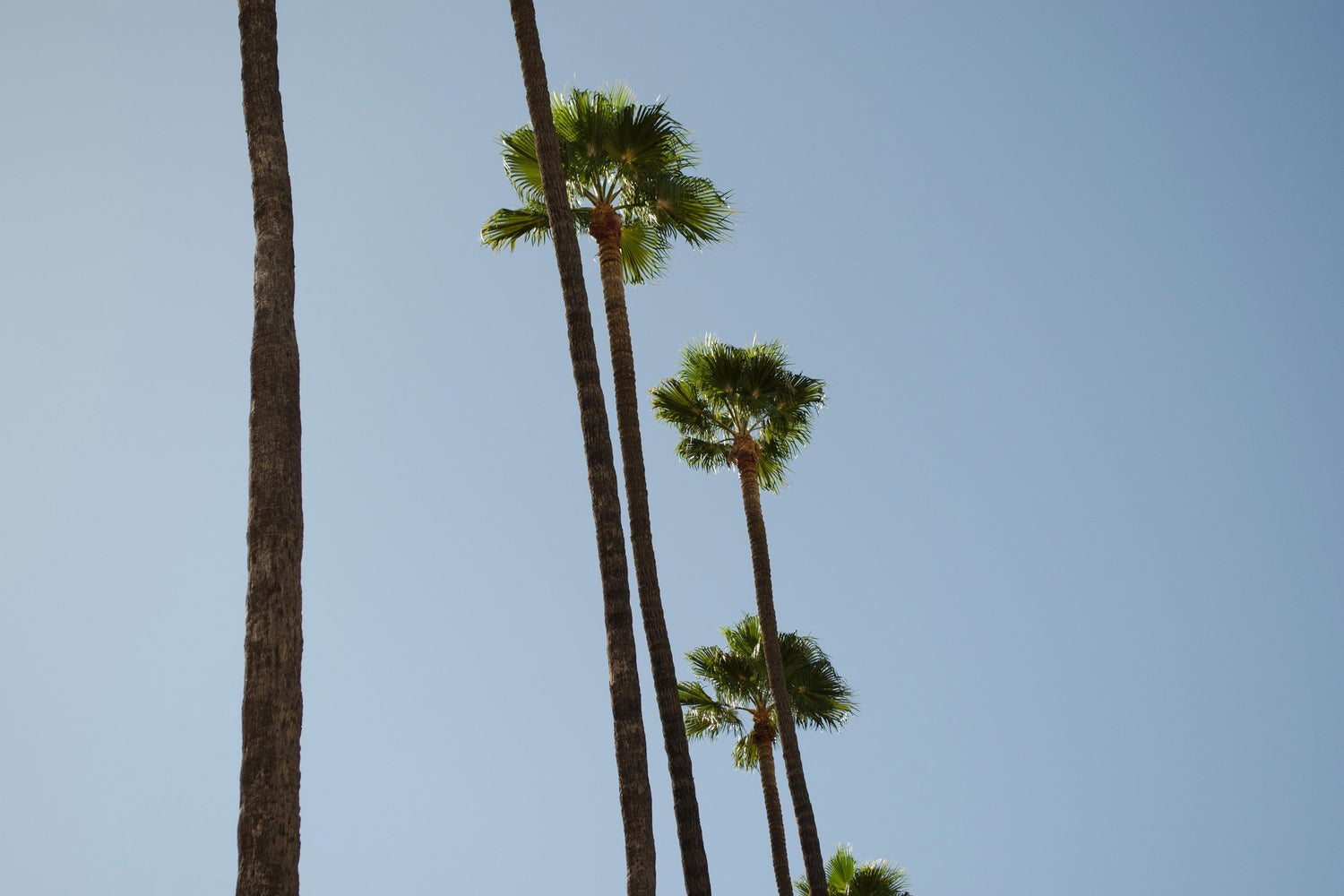 Image of Palm Trees (USA)