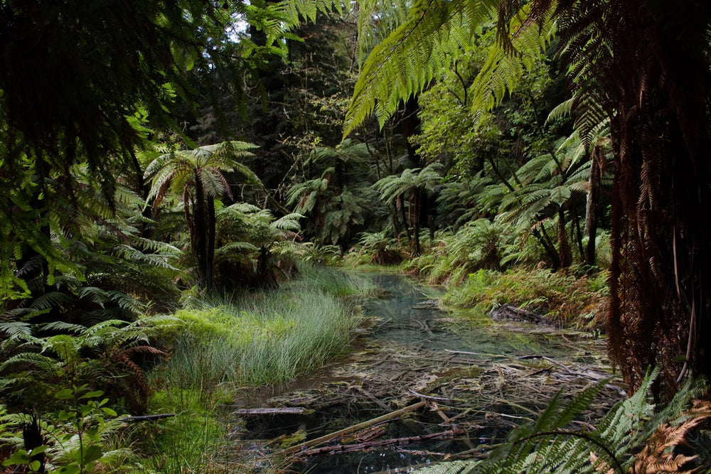 Image of Green Oasis (NZ)
