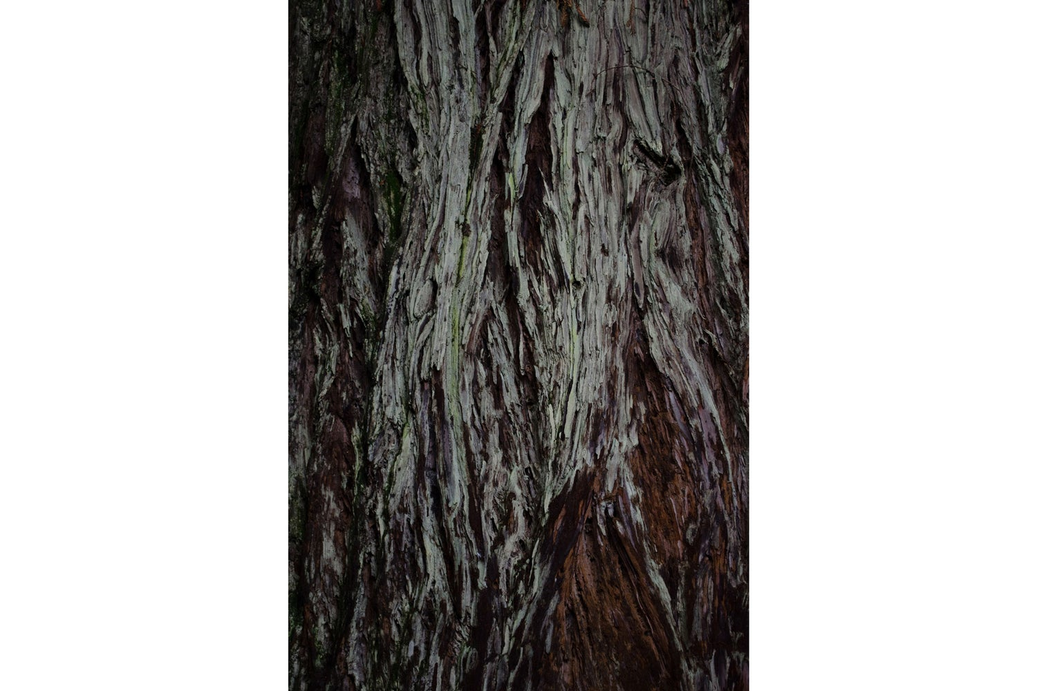 Image of Red Trunk (NZ)