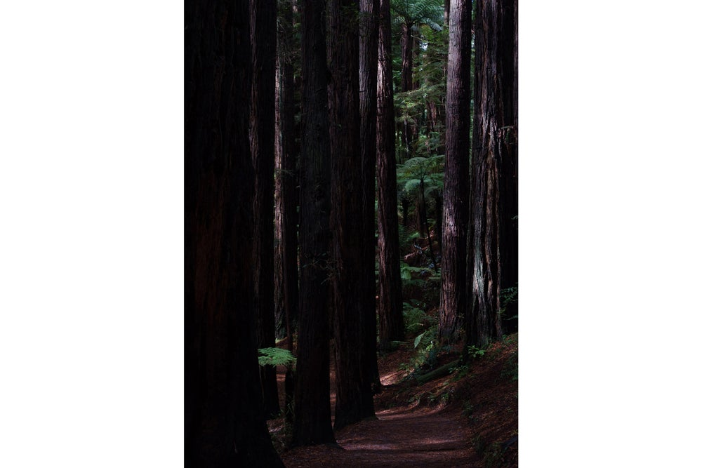 Image of The Redwoods (NZ)