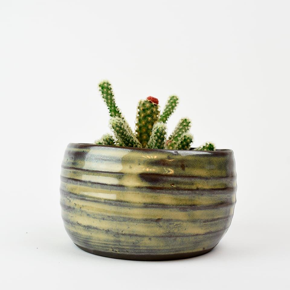 Image of cactus container