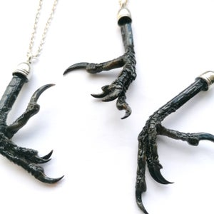 Image of Preserved Natural Magpie Claw Necklace