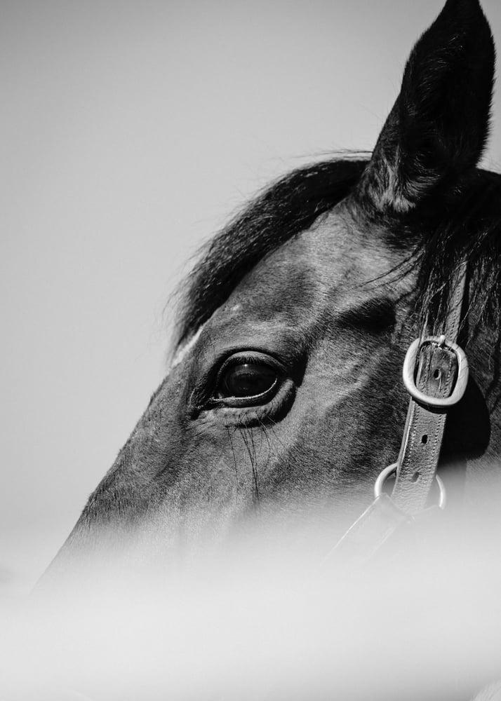 Image of Hidden Horse 2