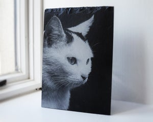 Personalised Pet Engraved A4 Slate