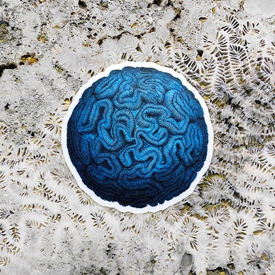 Image of Haeckel Brain Stone Sticker