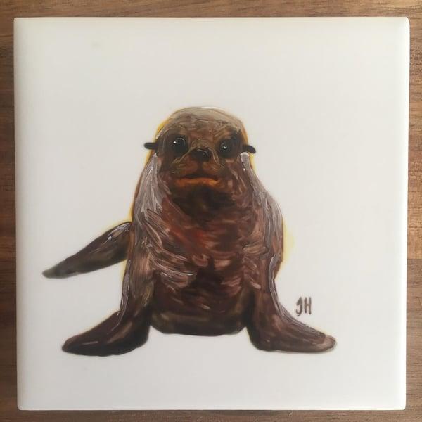 Image of New Zealand Fur Seal Coaster