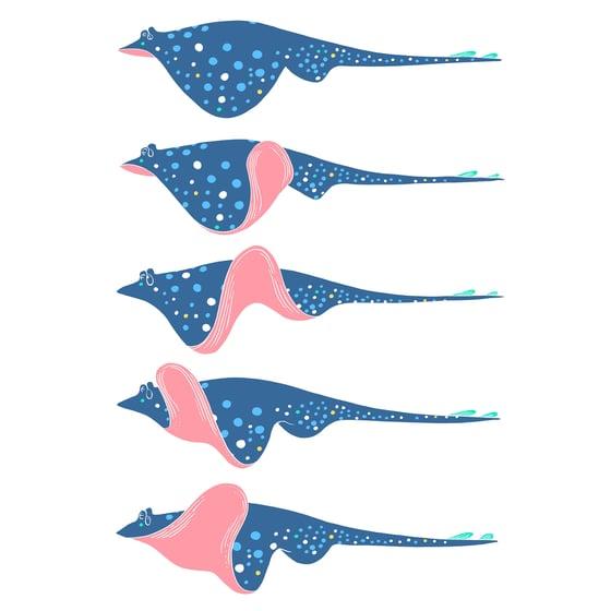 Image of Raie étude   Skate Fish Study