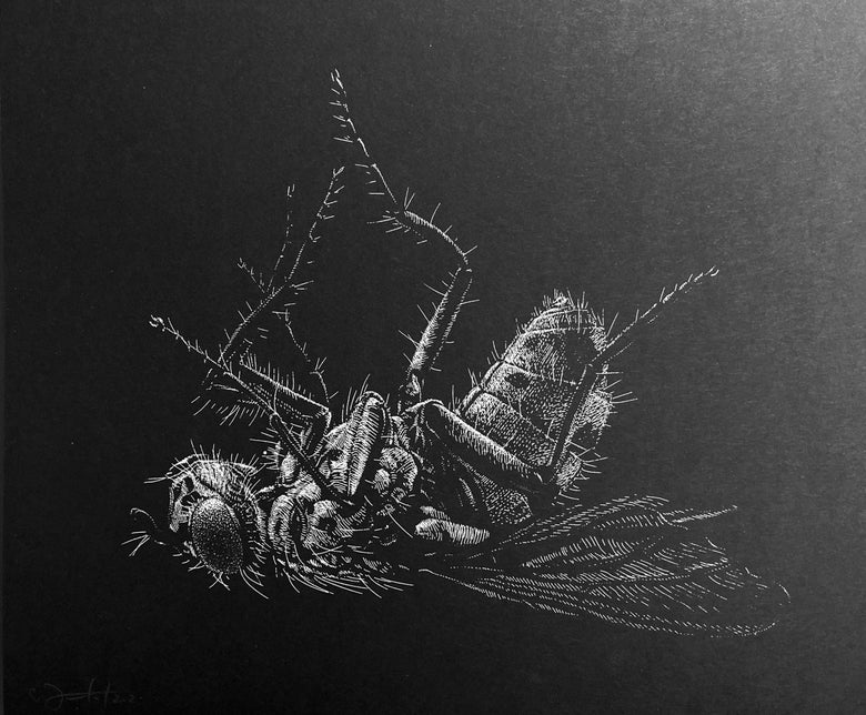 Image of »Fly«