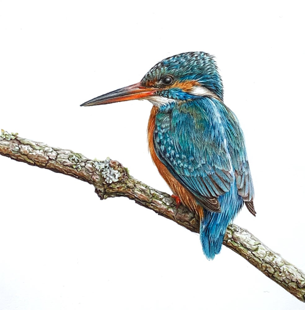 Image of 'Kingfisher' Limited Edition Mounted Print
