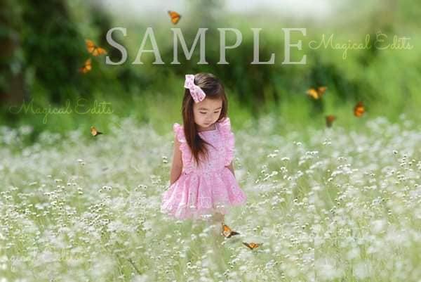 Image of Spring Flower Field