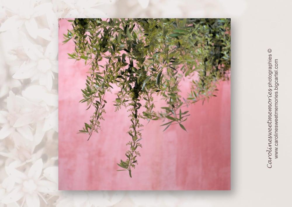 Image of Le mur rose et l'olivier | TIRAGE PHOTO