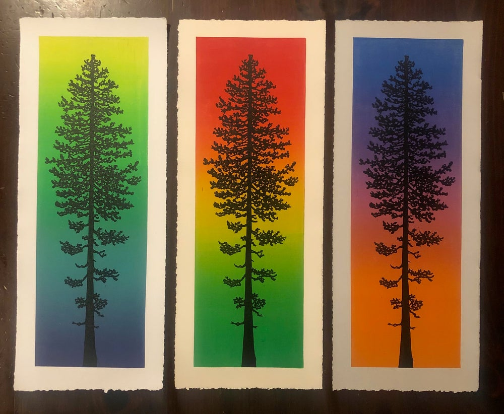 Image of Ponderosa Pine prints