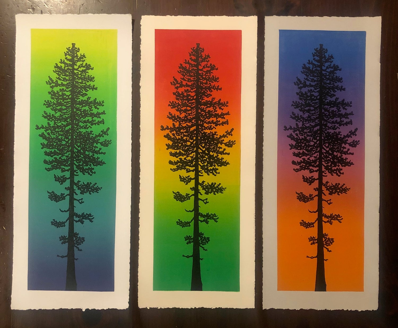 Image of Ponderosa Pine prints