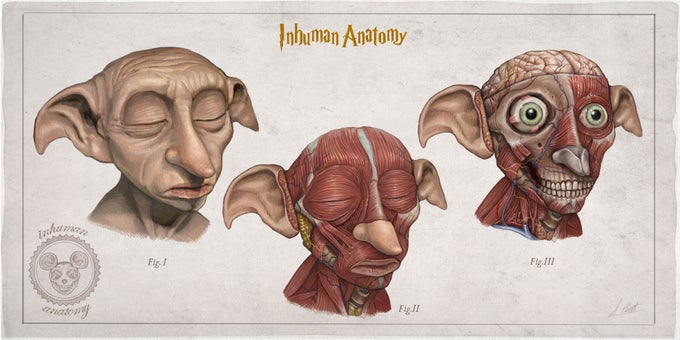 Image of DOBBY - head anatomy (limited ed. of 50 Giclèe wide print on fine art canvas)